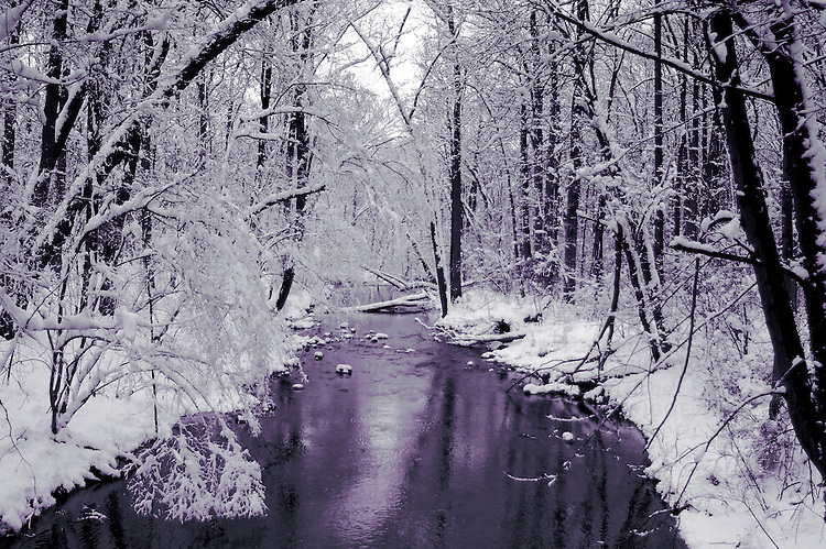 A winter scene in woodland