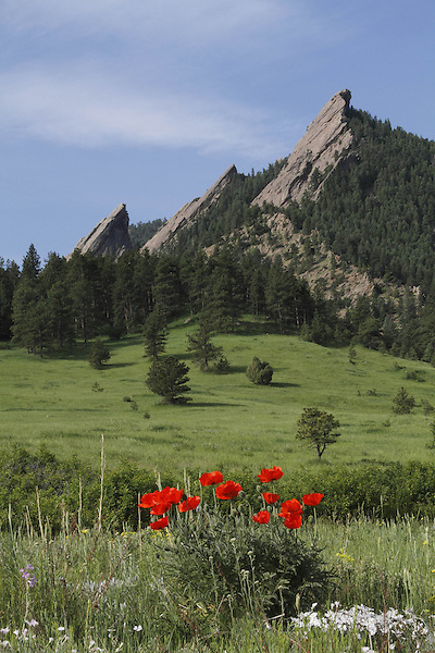 Red poppy wildflowers at the base of the Flatirons rock formation in Chautauqua Park, Boulder, Colorado, USA .  John leads private photo tours in Boulder and throughout Colorado. Year-round Colorado photo tours.