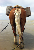 una farfalla si posa sul cavallo  sulla spiaggia  per la pesca ai gamberetti<br />