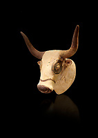 Minoan  bull's head rhython libation vessel, Machlos 1500-1450 BC; Heraklion Archaeological  Museum, black background.