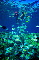 Couple snorkeling with colorful reef fish