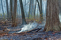 Controlled Burn River Trail Nature Center Cook County Forest Preserves Northbrook Illinois 12-3-17