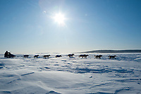 Sebastian Schnuelle runs on Norton Sound on his way to Koyuk during Iditarod 2009