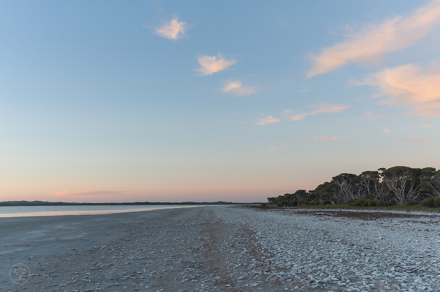 Lake Robe shoreline, littered with oyster shells, at sunset on a clear evening.