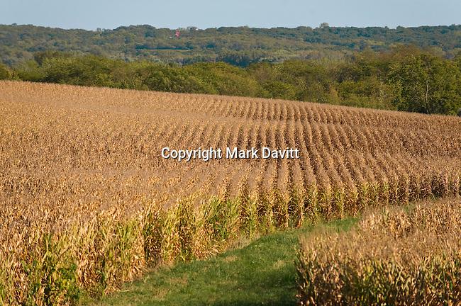 Agriculture, Crop, Corn, Corn Field, Corn Crop. Fall, Harvest, Field, Farm, Farm Land, Hill, Hillside, Grass, Conservation, Day, Iowa, USA