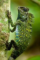 Borneo (Malaysian) Reptiles