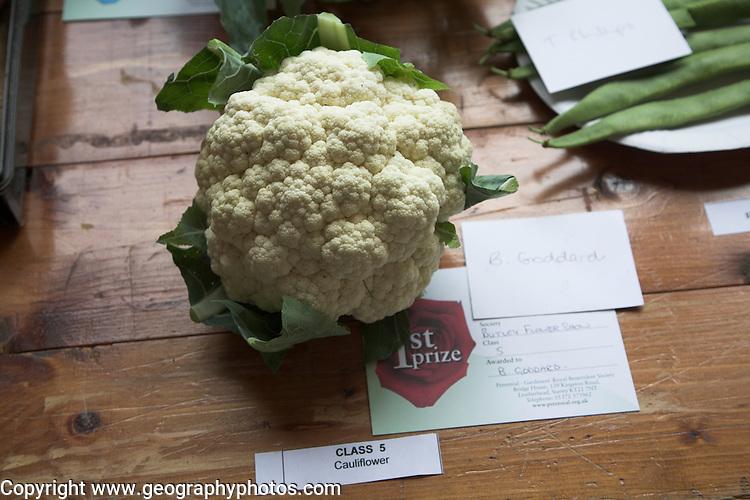 Cauliflower, First prize, Butley Flower Show village fete, Butley, Suffolk, England