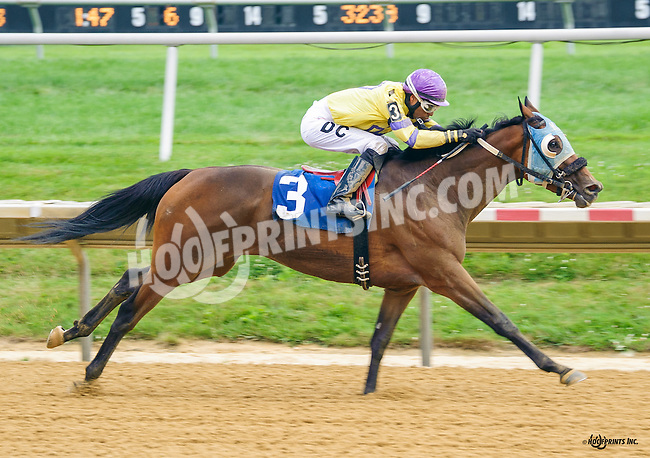 Rum Therapy winning at Delaware Park on 7/21/16