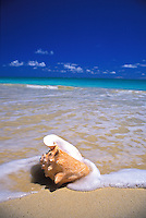 Conch shell rests genlty on an Hawaiian Beach.
