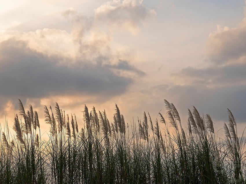 Long grass and sky at sunset creates an moody and peaceful image along the road near Subic Bay, Pampanga, Philippines.
