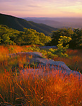 Shenandoah National Park, VA<br /> Evening light on a field of grasses and boulders from Timber Hollow Overlook overlooking the layered Shenandoah Mountains