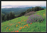 RT-2, Tilden Regional Park, Bay Area Ridge Trail, 5x7 postcard, lupine, CA poppies