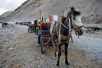 A pony cart at the tent village waiting to take tourists to Everest Base Camp in the morning.<br /> China started building a controversial 67-mile &quot;paved highway fenced with undulating guardrails&quot; to Mount Qomolangma, known in the west as Mount Everest, to help facilitate next year's Olympic Games torch relay.<br /> Tibet, China<br /> July, 2007