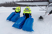 Volunteer pilots Joe Pendergrass and Diana Moroney drag bales of straw destined for the Yentna Checkpoint towards Joe's Cessna airplane during the Willow Fly Outat the Willow Airport prior to the 2019 Iditarod Race on Wednesday February 20, 2019.<br />