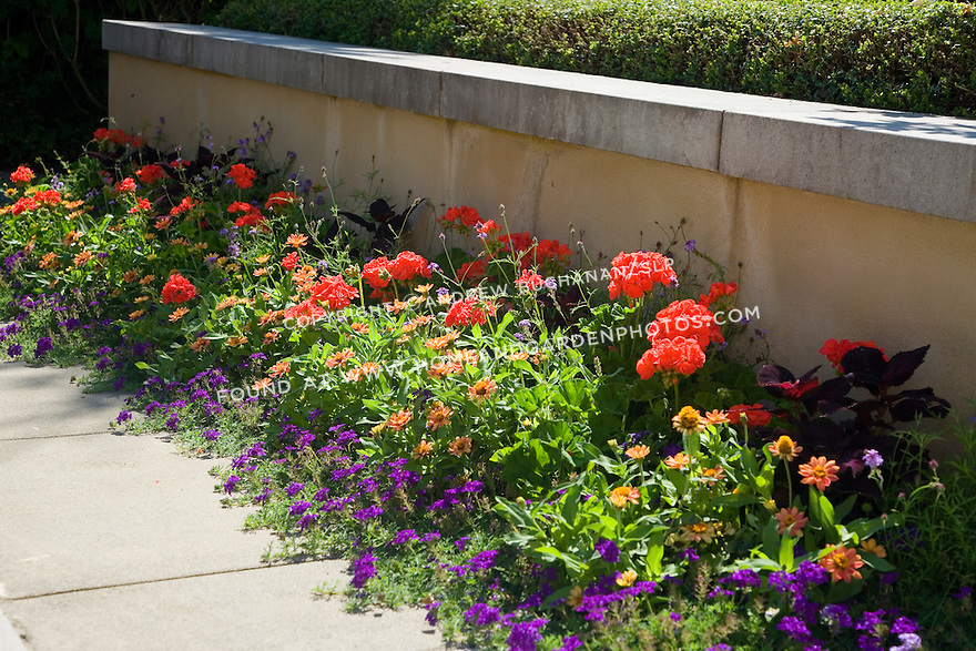 a border of summer annuals in red, deep reddish-black, purple, and orange colors sit in the summer sun in front of a low stucco retaining wall