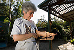 Tolga Bat Hospital President Jenny Maclean stretches out the wing of a Spectacled Flying Fox. (Pteropus conspicillatus)