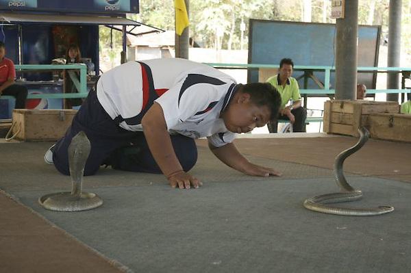 INT01. BAN KOK SANGA (TAILANDIA), 22/12/2011.- Un entrenador de serpientes mira fijamente a una cobra para ejercer su control mental sobre ella en Ban Kok Sanga, una aldea en la que viven más reptiles que habitantes. Casi todas las familias tienen uno de estos animales que han sustituido al perro como mascota. EFE/Nadiah Rosli. /// SOLO USO EDITORIAL ///