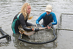 Stephanie & Kattie Putting Shovelnose Guitarfish Shark Into Pen