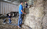 NWA Democrat-Gazette/DAVID GOTTSCHALK  Hudson Moore (from left), 2, watches as his brother Cameron, 15, assists his other brother Kipton, 6, down from a stack of square hay bails Tuesday, June 13, 2017 inside one of the barns on the his families' 500 acre Moore Valley Farms near Lincoln. The Moore family was named the 2017 Washington County Farm Family of the Year.