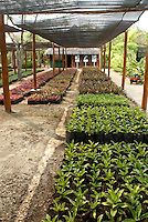 Palm tree and red mangrove seedlings at a plant nursery, Hacienda Tres Rios on the Riviera Maya, Quintana Roo, Mexico.