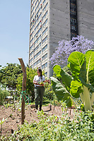 Gabriela Vargas at her Huerto Tlatelolco, Urban vegetable garden at the 60s modernist urban housing development Nonoalco Tlatelolco,  Mexico City, Mexico