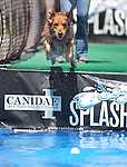 Pam Kindall, of Reno, and Benny, 3, participate in the Splash Dogs dock diving competition at the Pet Wellness and Adoption Festival Saturday, May 28, 2011, in Reno, Nev. .Photo by Cathleen Allison