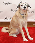 Macy attends the meet & Greet for Playwrights Horizons New York Premiere pf 'For Peter Pan on her 70th Birthday' on July 25, 2017 at the Playwrights Horizons Studios at  in New York City.