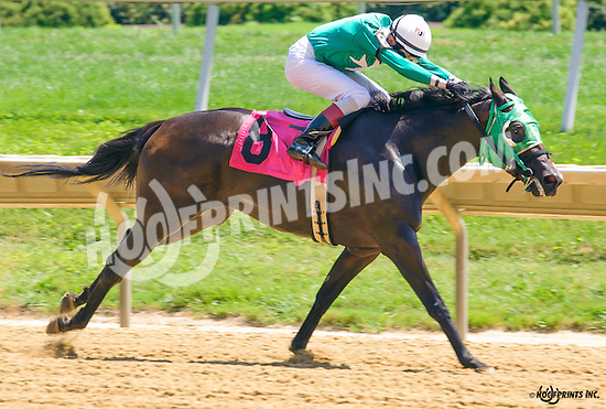 Northern Mine winning at Delaware Park on 8/11/16