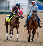LOUISVILLE, KENTUCKY - APRIL 30: Master Fencer, trained by Koichi Tsunoda, exercises in preparation for the Kentucky Derby at Churchill Downs in Louisville, Kentucky on April 30, 2019. Scott Serio/Eclipse Sportswire/CSM