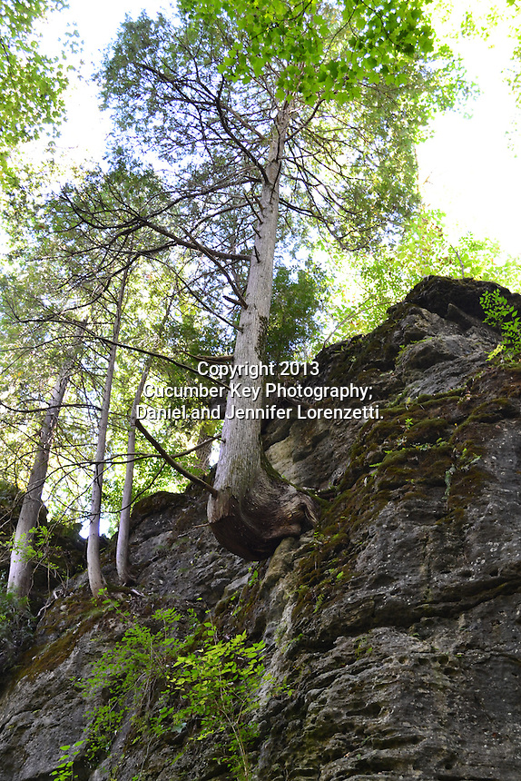 "This tree growing from an outcropping at Glen Helen Nature Preserve is the perfect visual metaphor for ""grow where you're planted."""