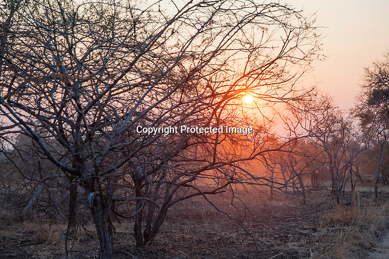 Sunrise on the African bush in Kafue National Park in Zambia