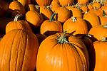 pumpkins before Hallowen