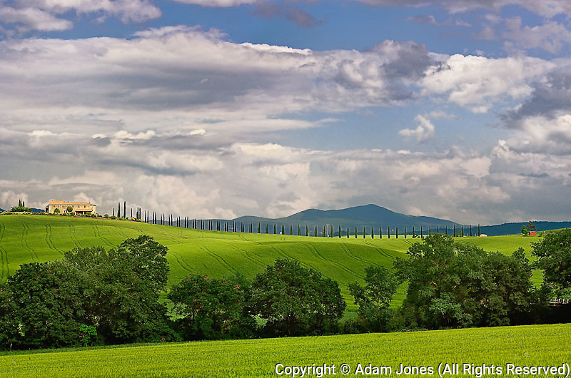 Wheat field and drive lined by stately cypress trees, Tuscany, Italy.