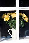 White jug yellow roses on window sill
