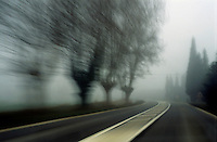 Blurry bare trees visible through the fog seen from a speeding car, Carpentras, Provence, France.