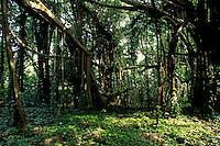 Palau Jungle