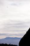 California Condor (Gymnogyps californianus) flying, Pinnacles National Park, California
