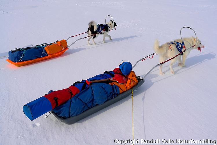 Grønlandshunder trekker pulk. ---- Grennland dogs pulling sleds.