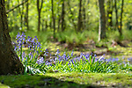 2018-05-01 - Spring in the Woods