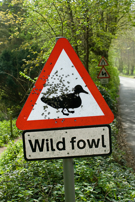 A road sign -warning of wild fowl crossing- peppered with bulletholes [shotgun pellets]. Blackpool Sands,Devon. England 2008.