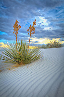 Pastel White Sands - New Mexico