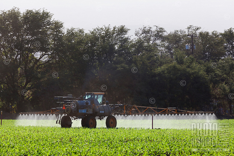 Genetically modified corn being sprayed with chemicals on Maui.