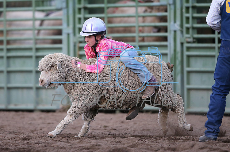 Cheyanne Stein competes in the Mutton Busting event at the 5th Annual Carson City Bulls, Broncs &amp; Barrels event at Fuji Park, in Carson City, Nev., on Saturday, July 29, 2017. <br /> Photo by Cathleen Allison/Nevada Photo Source