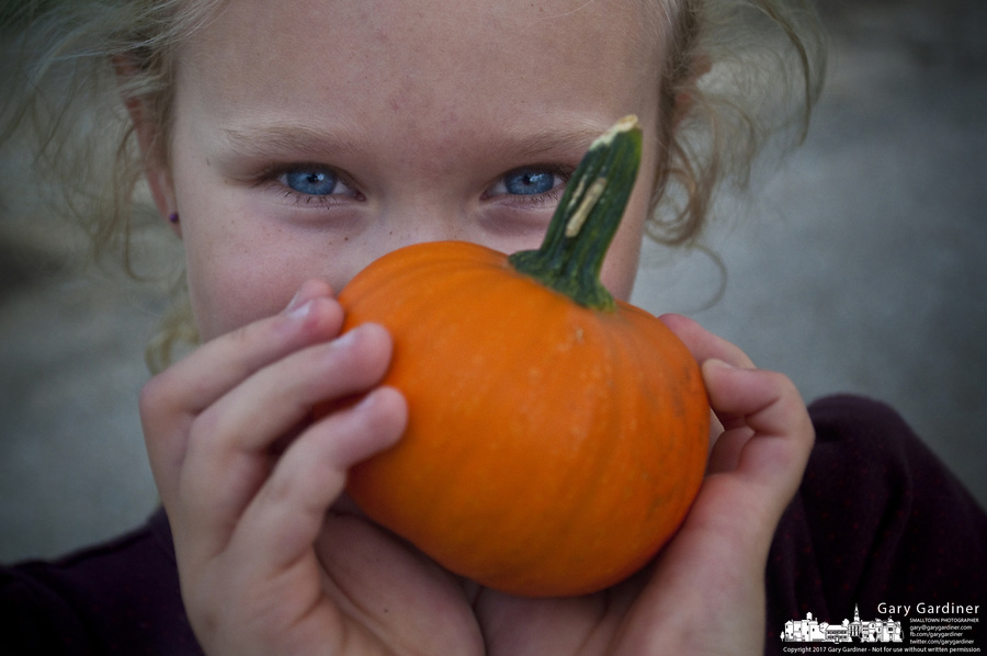 Young girl with clue eyes and blonde hair peering over very small pumpkin she holds in her hands at a farmers market.