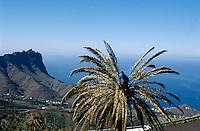 """Spanien, Kanarische Inseln, Gomera, bei Alojera. Beschneiden von """"Honig""""-Palmen"""