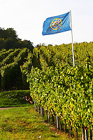 flag vineyard domaine gerard neumeyer alsace france