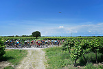 The peleton pass by vineyards during Stage 14 of the 2018 Giro d'Italia, running 186km from San Vito al Tagliamento to Monte Zoncolan features Europe's hardest climb, Italy. 19th May 2018.<br /> Picture: LaPresse/Fabio Ferrari | Cyclefile<br /> <br /> <br /> All photos usage must carry mandatory copyright credit (&copy; Cyclefile | LaPresse/Fabio Ferrari)