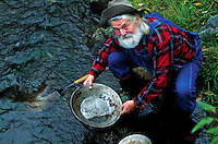 A senior male gold prospector pans for nuggets. Alaska.