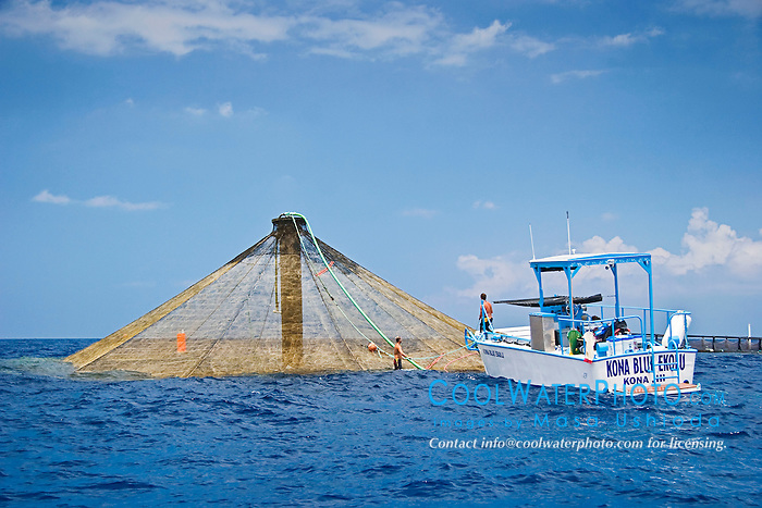 workers feeding Kona Kampachi, Hawaiian yellowtail, aka almaco jack or kahala, Seriola rivoliana, in  3,000-cubic-meter submersible pen installed in open ocean just off Kona Coast, Kona Blue Water Farms, Big Island, Hawaii, Pacific Ocean