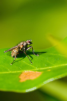 A fly rests on a leaf.